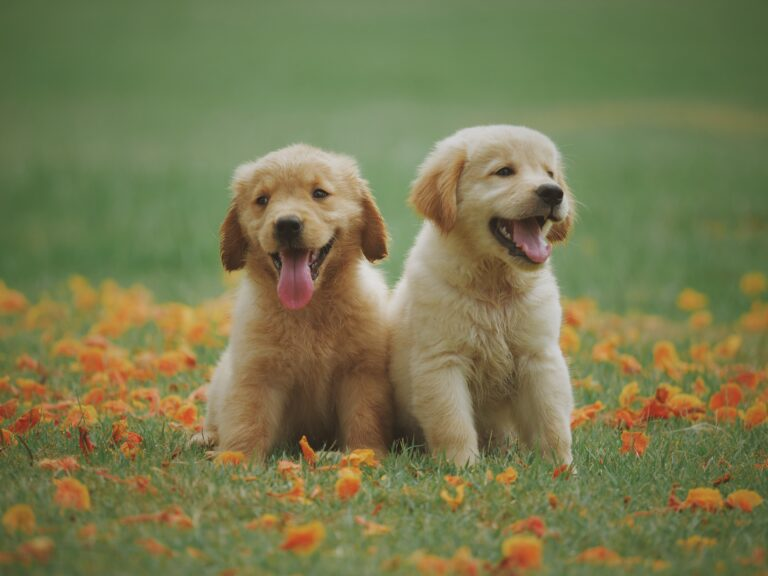RAW FOOD DIETS FOR DOGS: FACTS & TIPS