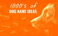 CHOOSE THE PERFECT DOG NAME