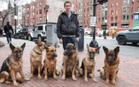 Cesar Millan german shepherd